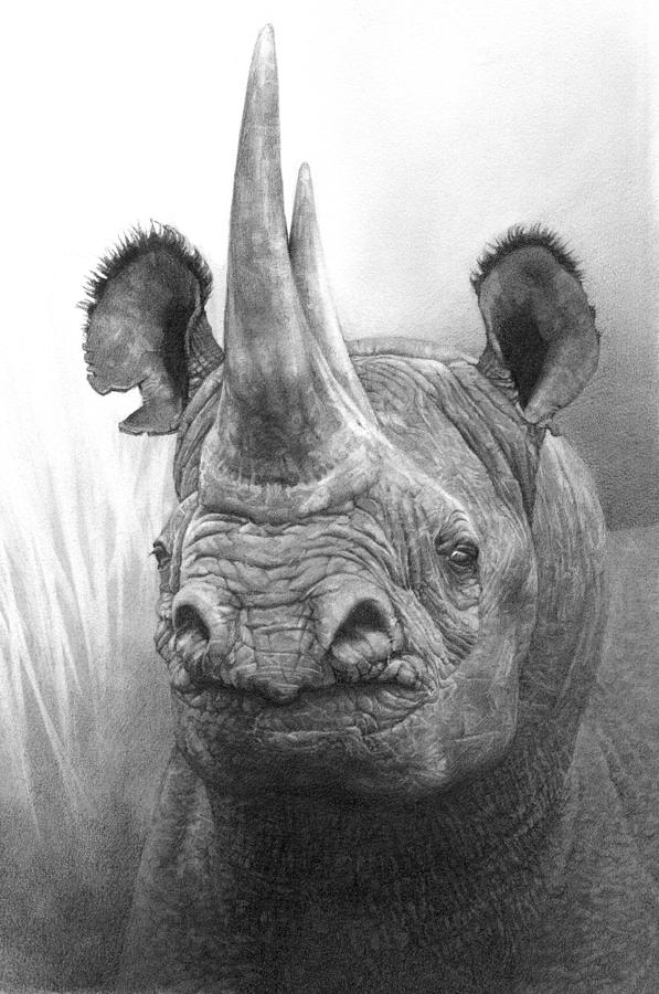 rhino drawings rhino in the clouds drawing with images rhino tattoo drawings rhino