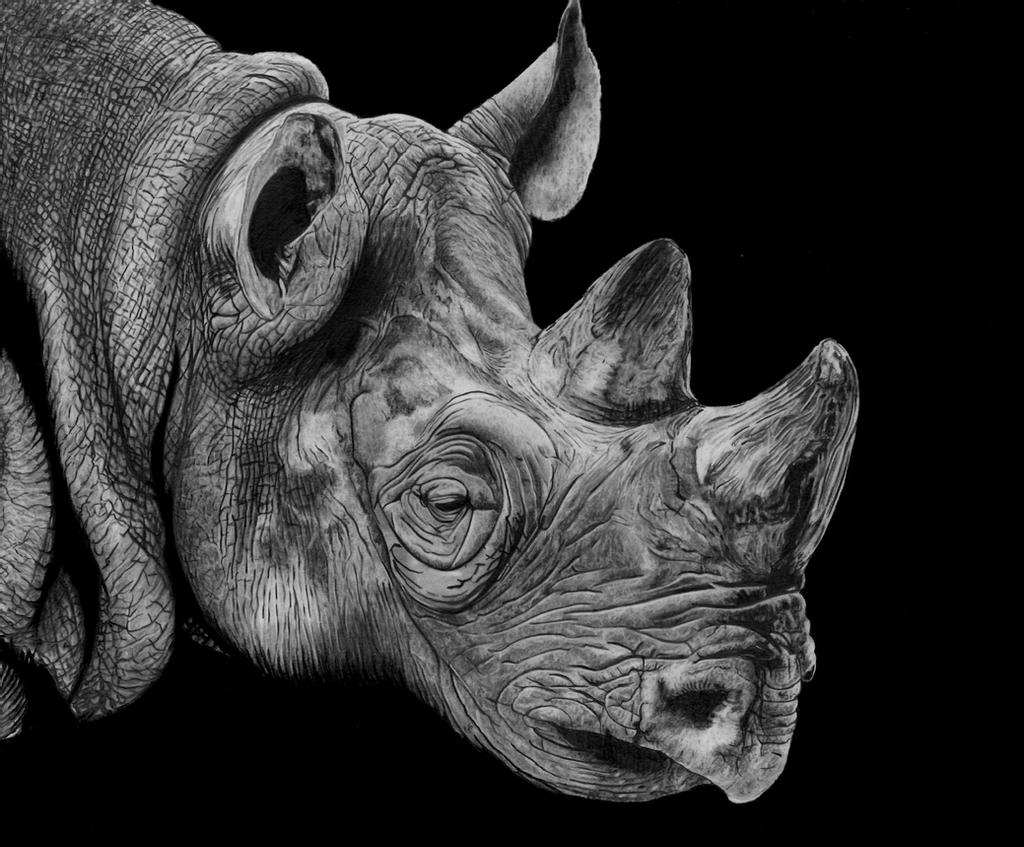 rhino drawings rhino line drawing free download on clipartmag rhino drawings