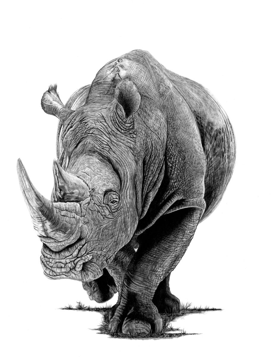 rhino drawings rhino pencil drawing at paintingvalleycom explore rhino drawings