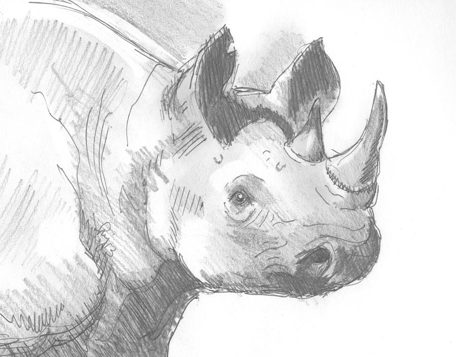 rhino drawings rhino sketch by natalie smith on dribbble drawings rhino
