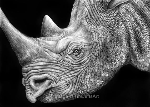 rhino drawings rhinoceros iguana drawing by tracey gurr ba hons drawings rhino