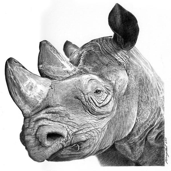 rhino drawings rhinoceros no 76 from historia animalium by conrad gesner drawings rhino