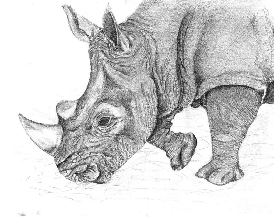 rhino drawings sketch of a rhino drawing by nadia parapanova rhino drawings