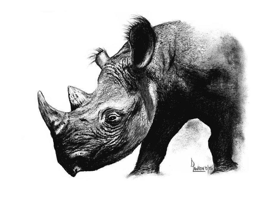 rhino drawings tim jeffs art rhino drawings