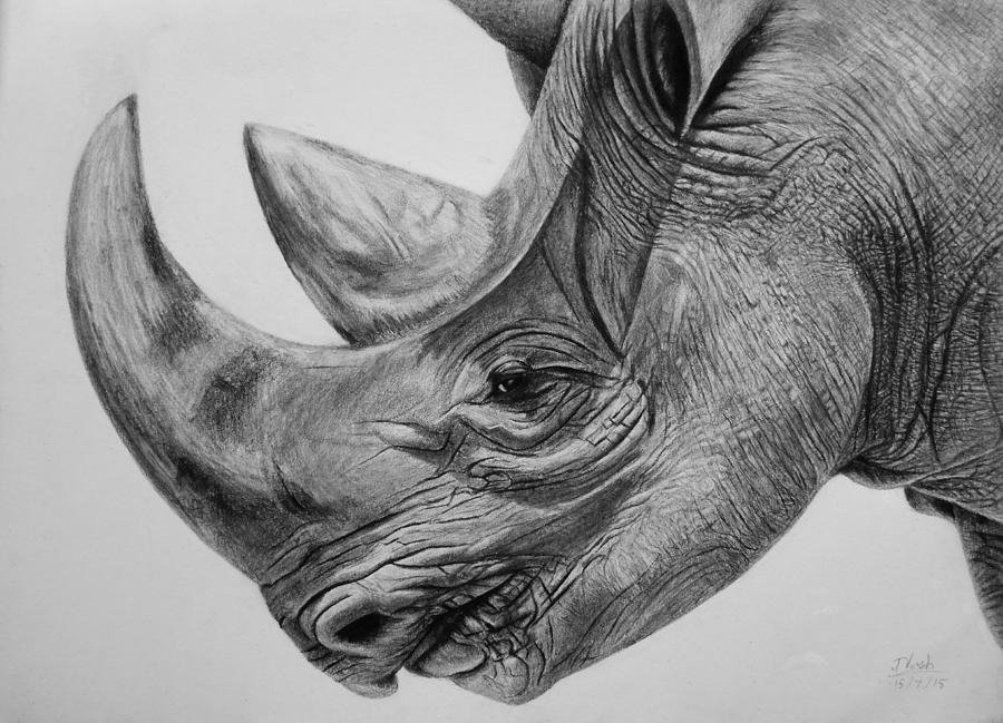 rhino drawings white rhino by paul shanghai on deviantart rhino drawings
