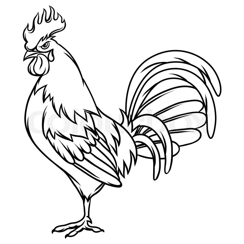 rooster outline rooster fight drawing at getdrawings free download outline rooster