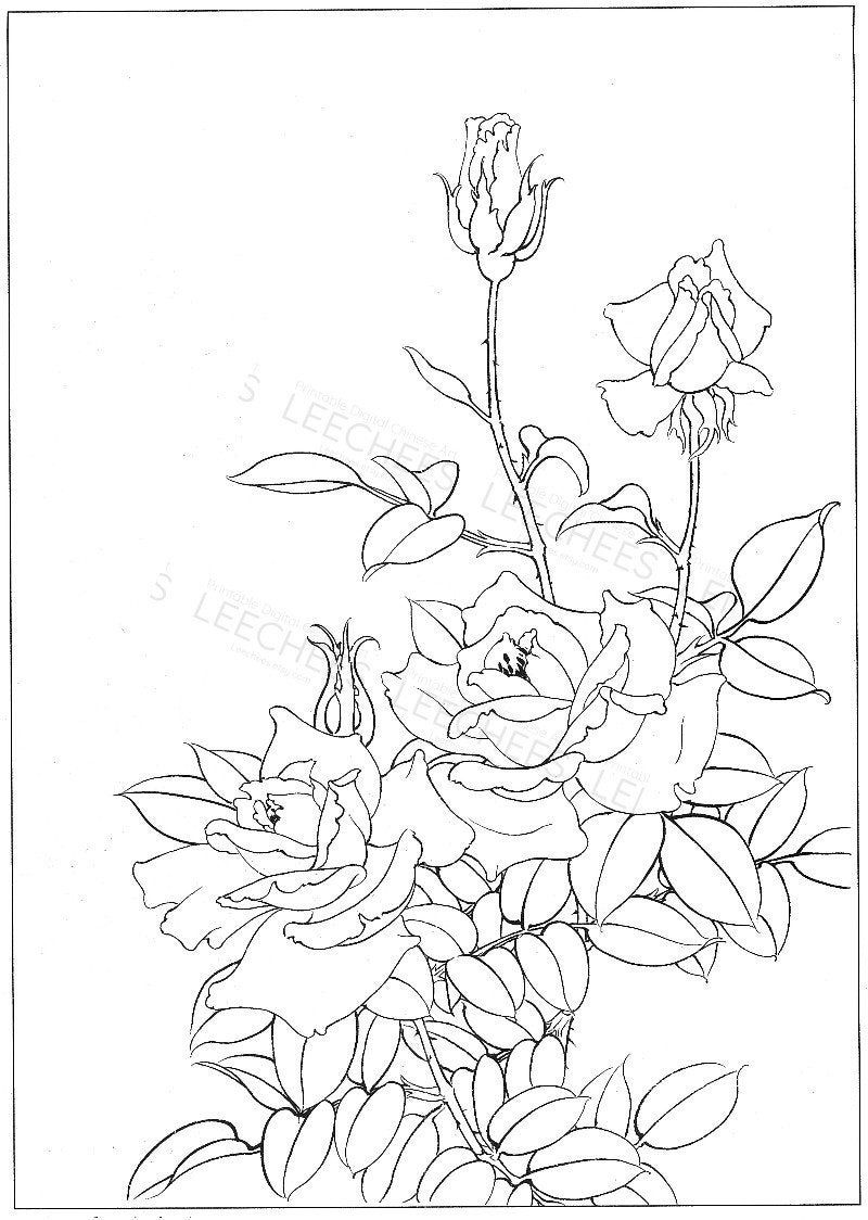 rose garden coloring page botanical garden line drawing roses flowers blossom garden page rose coloring