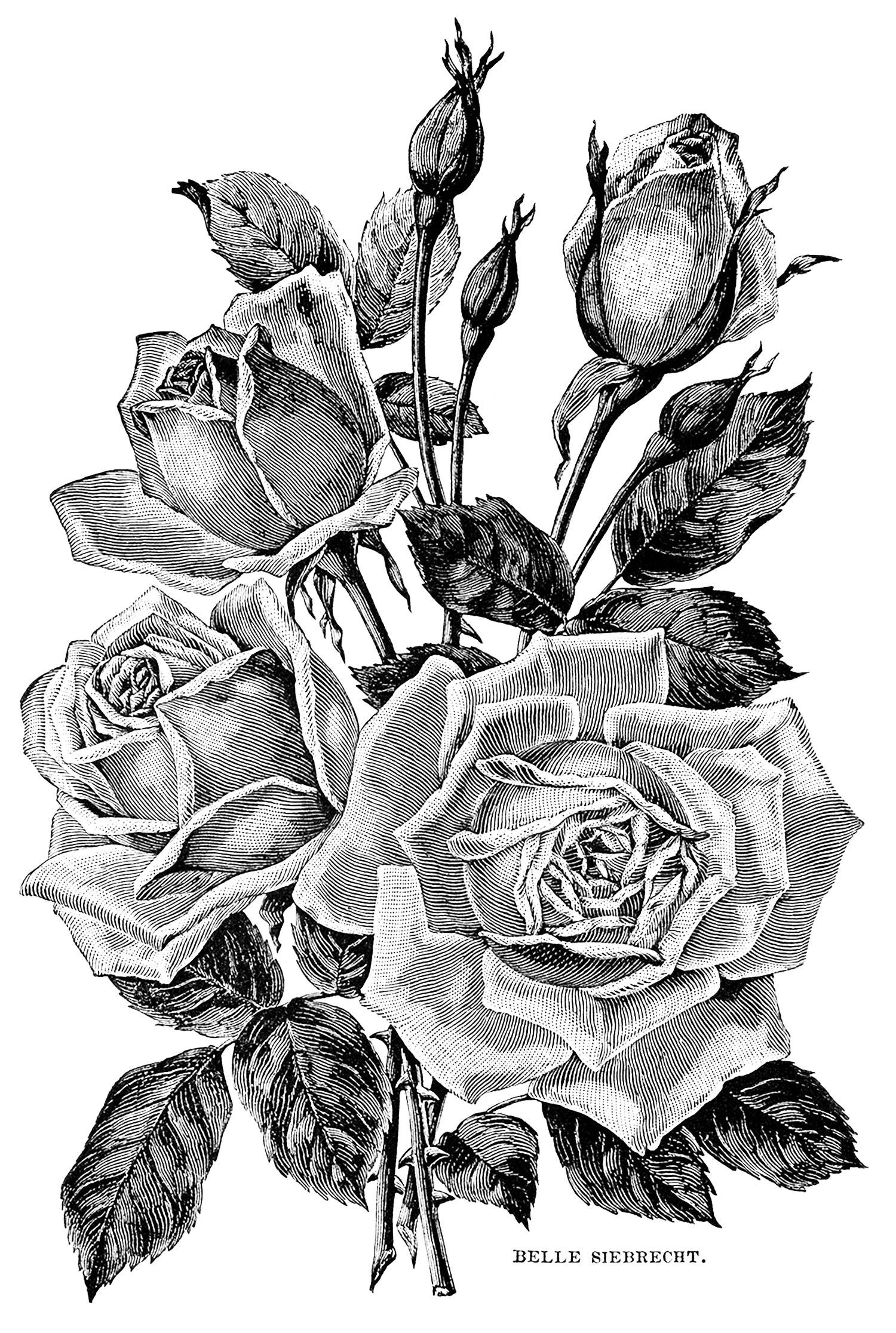rose garden coloring page flowers and vegetation coloring pages for adults garden coloring rose page