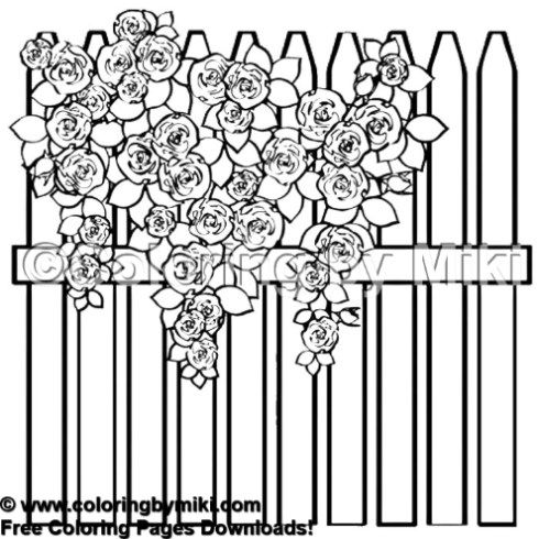 rose garden coloring page my little garden rose fence coloring page 2022 rose garden rose page coloring