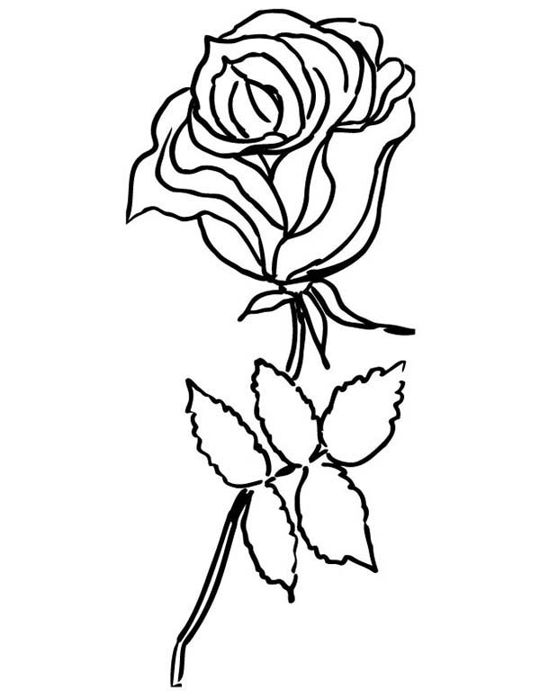 rose garden coloring page peonies roses garden and earthworm coloring pages batch page garden coloring rose