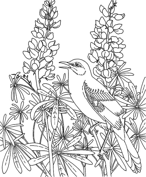 rose garden coloring page rose garden coloring pages at getcoloringscom free page coloring rose garden