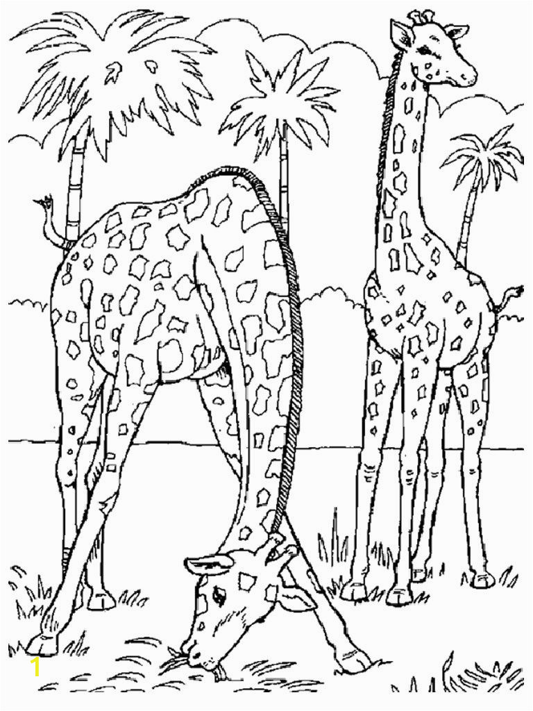 safari animal coloring pages african safari coloring pages printable free coloring sheets coloring pages safari animal