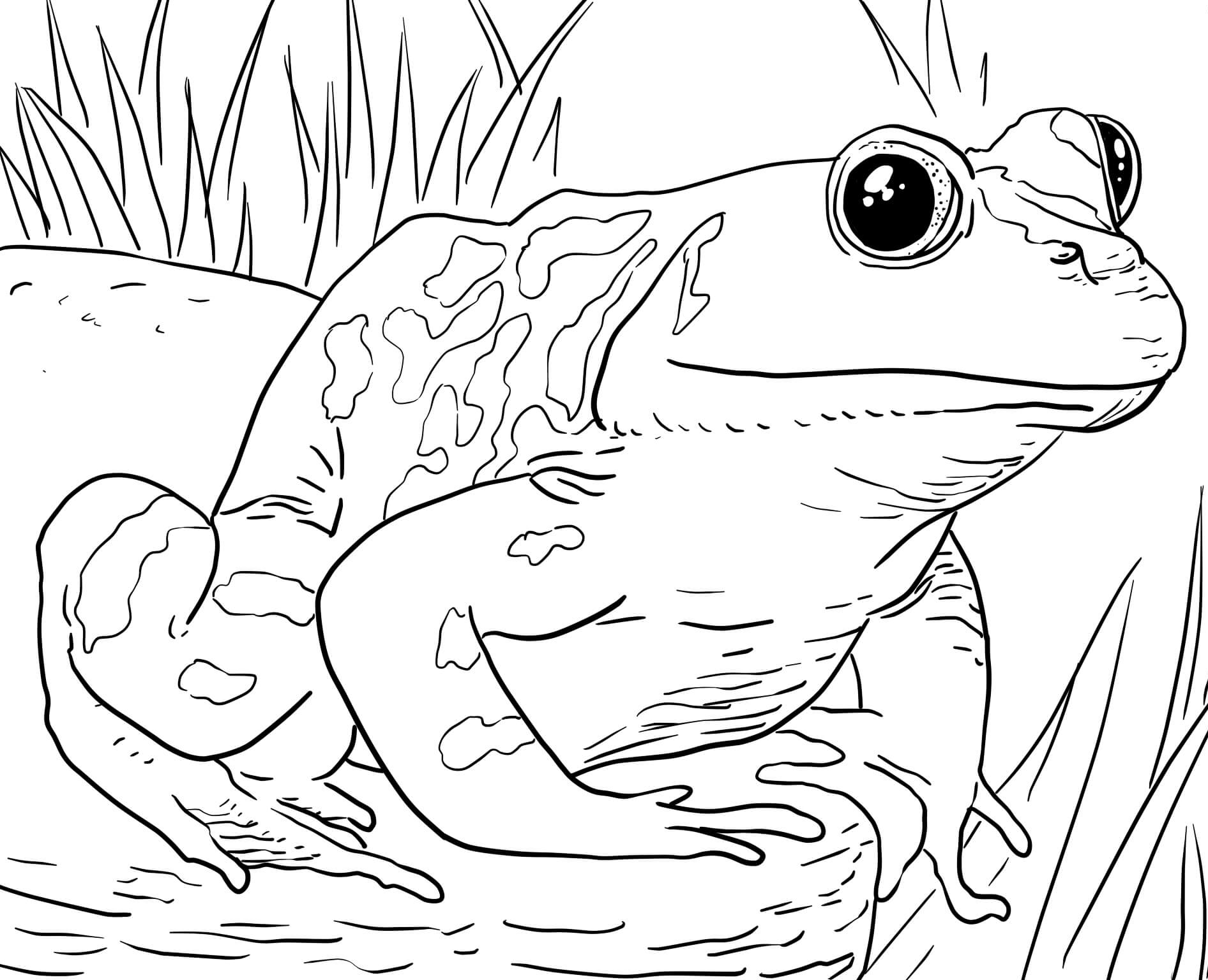 safari animal coloring pages free zoo animals coloring pages pages safari animal coloring