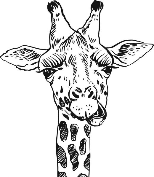 safari animal coloring pages jungle animals coloring pages kidsuki animal coloring safari pages
