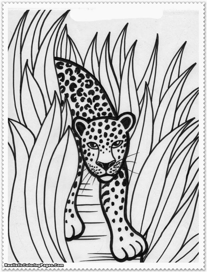 safari animal coloring pages jungle forest animals jungle forest adult coloring pages animal safari coloring pages