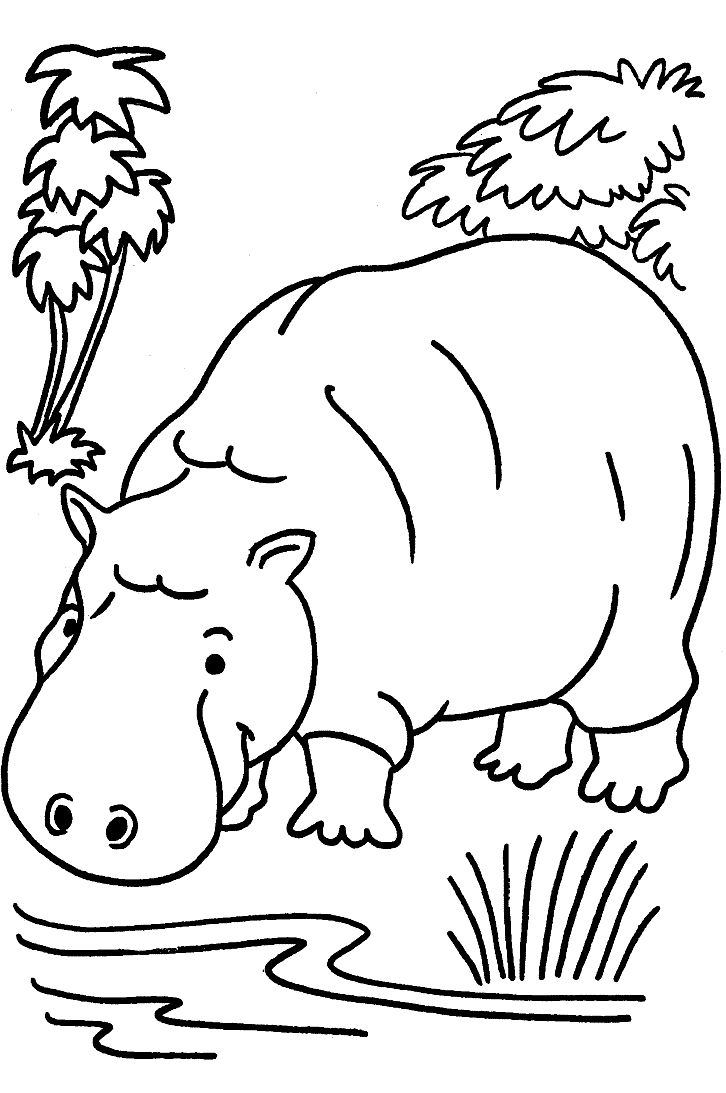 safari animal coloring pages zebra animal zoo animal coloring pages zebra coloring animal safari pages coloring
