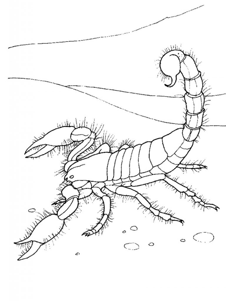 scorpion coloring easy scorpion drawing at getdrawings free download scorpion coloring