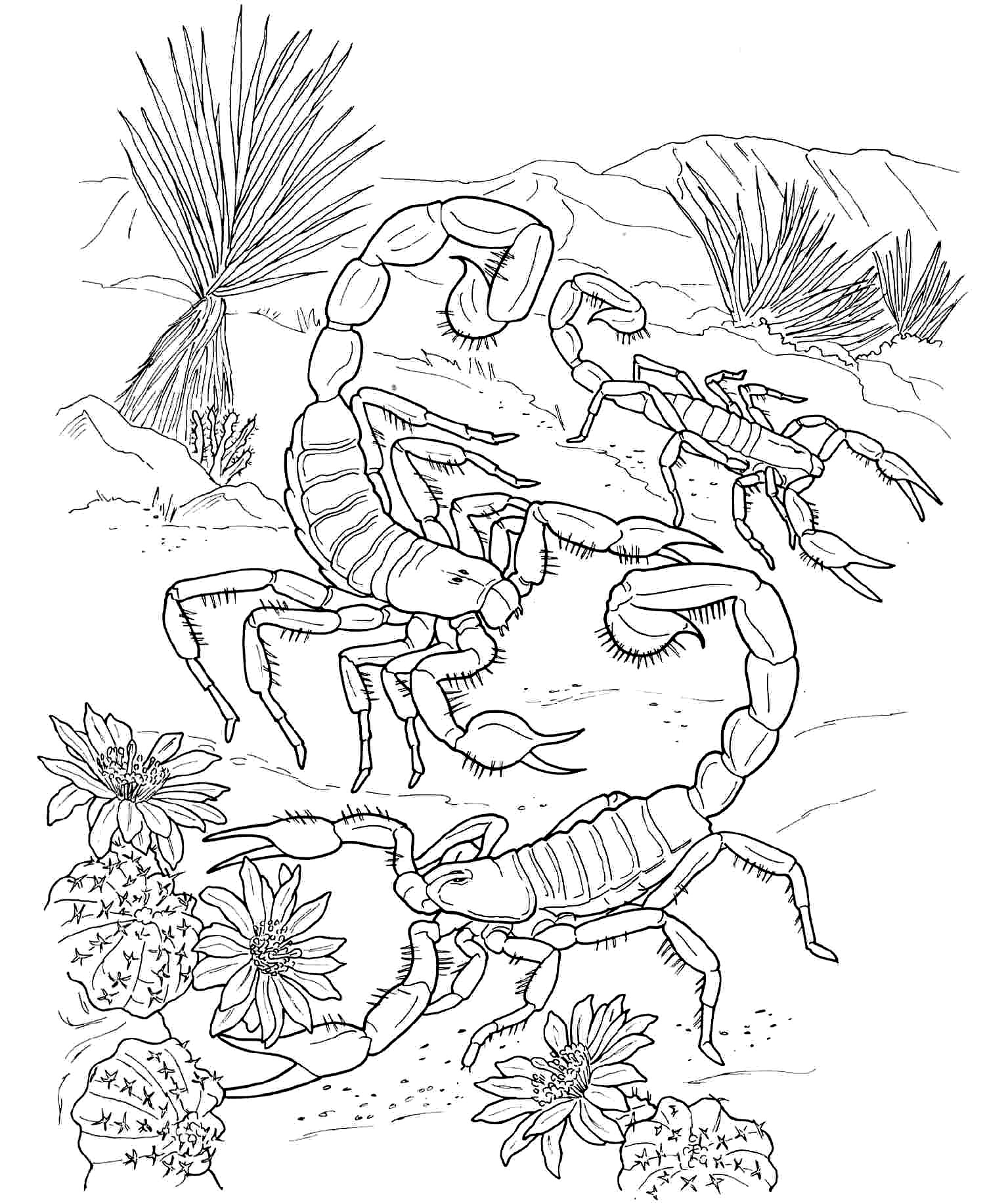 scorpion coloring free printable scorpion coloring pages for kids coloring scorpion 1 2