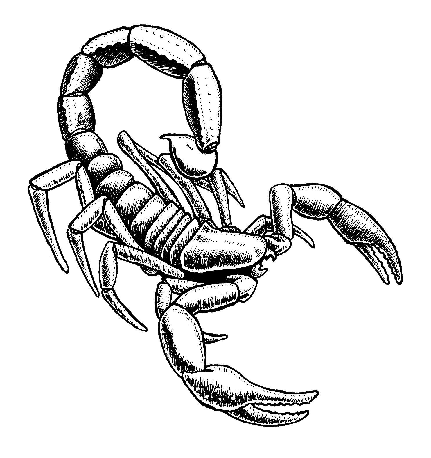 scorpion coloring scorpion 9 coloring page free printable coloring pages coloring scorpion