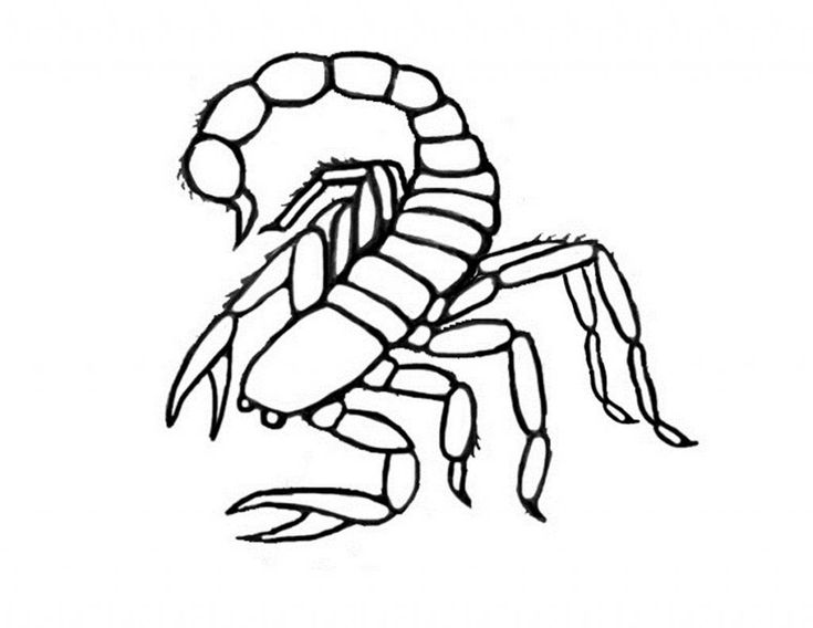 scorpion coloring scorpion coloring pages coloring pages to download and print coloring scorpion