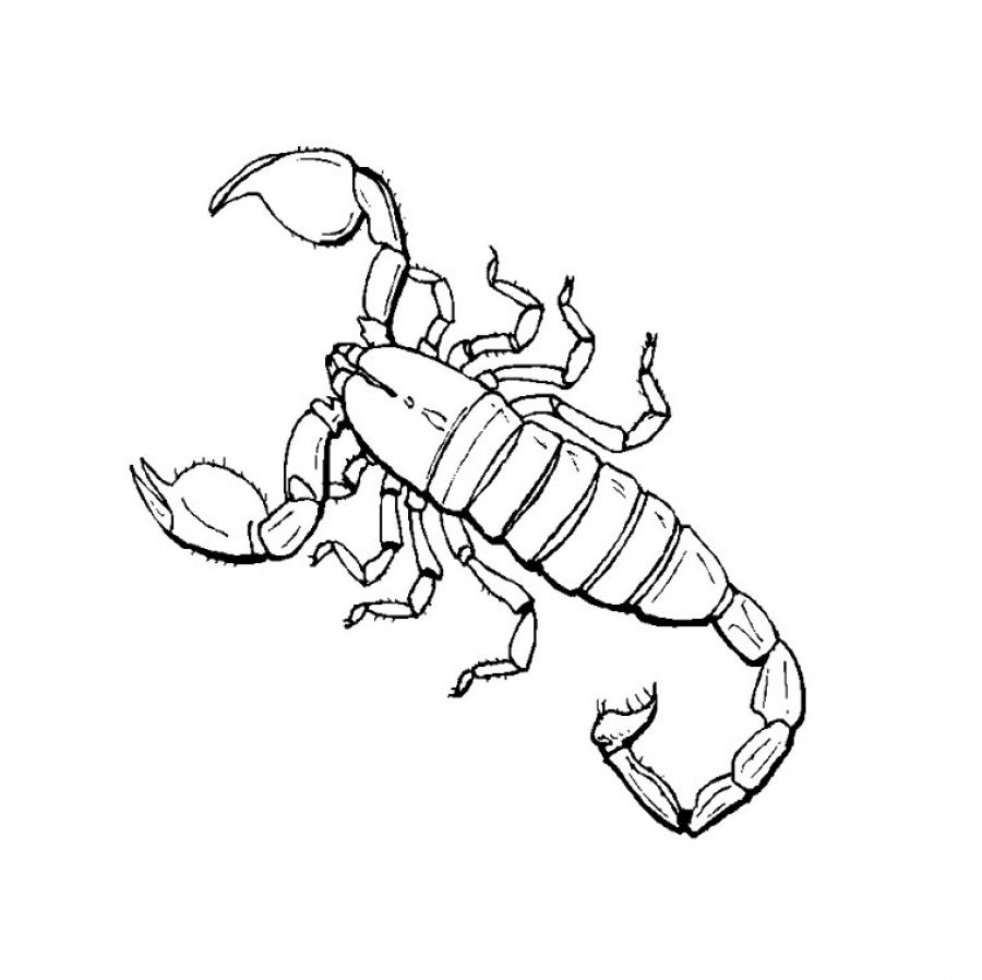 scorpion coloring scorpions coloring pages coloring home scorpion coloring