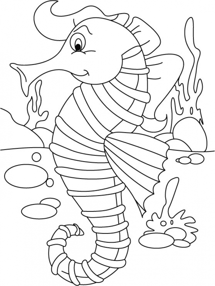 sea horse coloring page printable seahorse coloring pages for kids cool2bkids horse sea page coloring