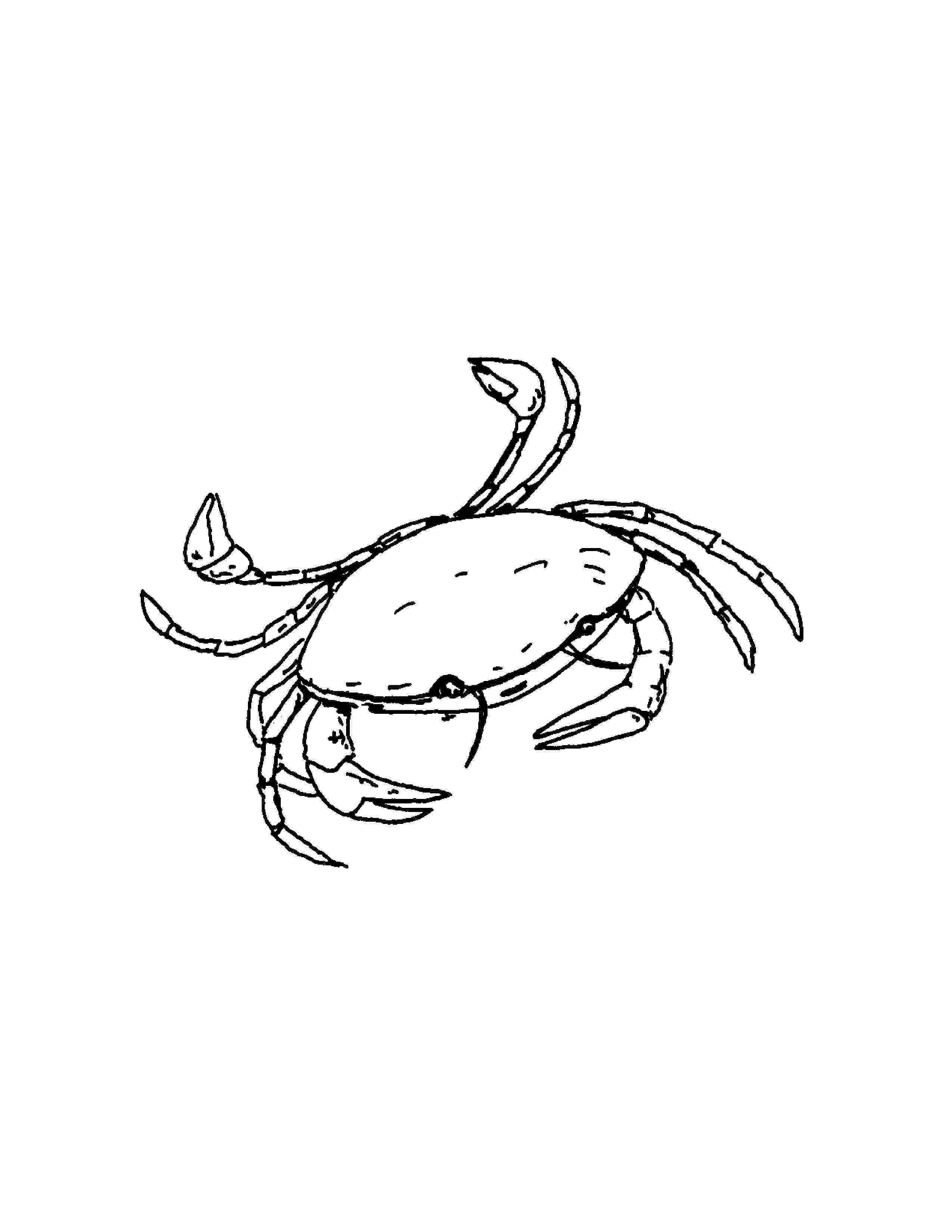 sea life animals coloring pages sea animals coloring pages coloring pages for kids coloring sea pages animals life