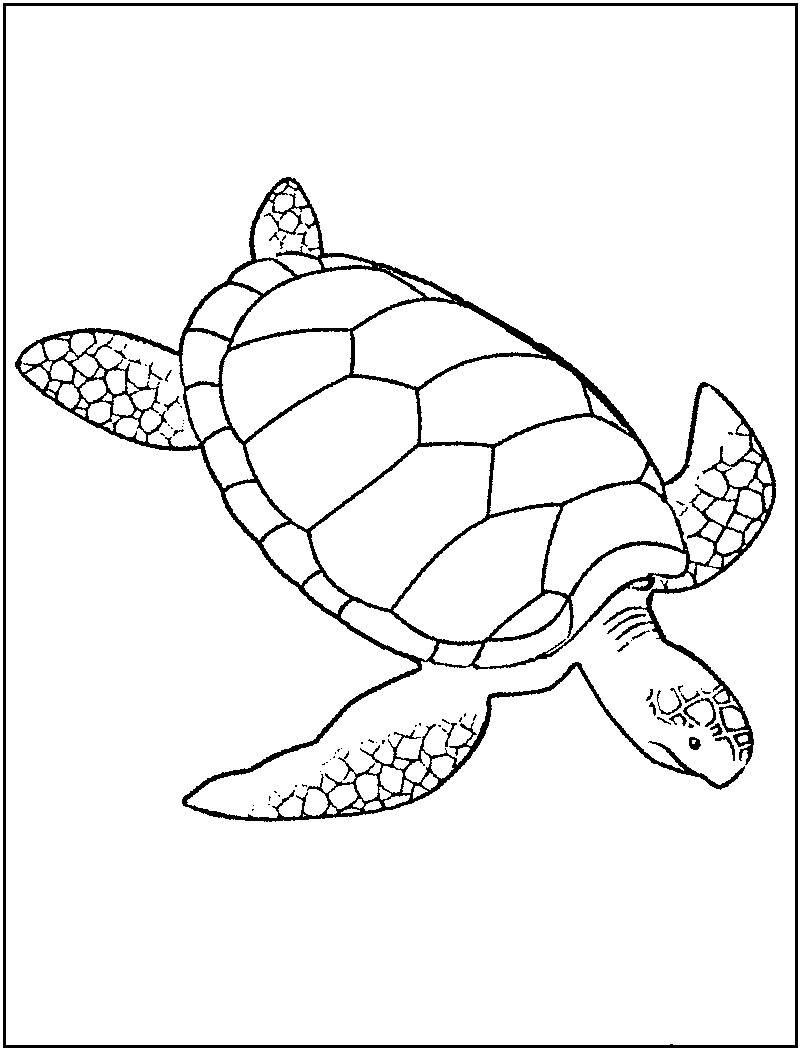 sea turtle coloring pages sea turtle colored pencil tutorial lachri fine art pages sea coloring turtle