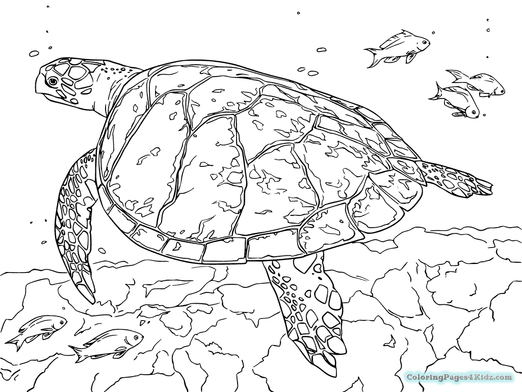 sea turtle coloring pages sea turtle coloring pages to download and print for free sea pages turtle coloring
