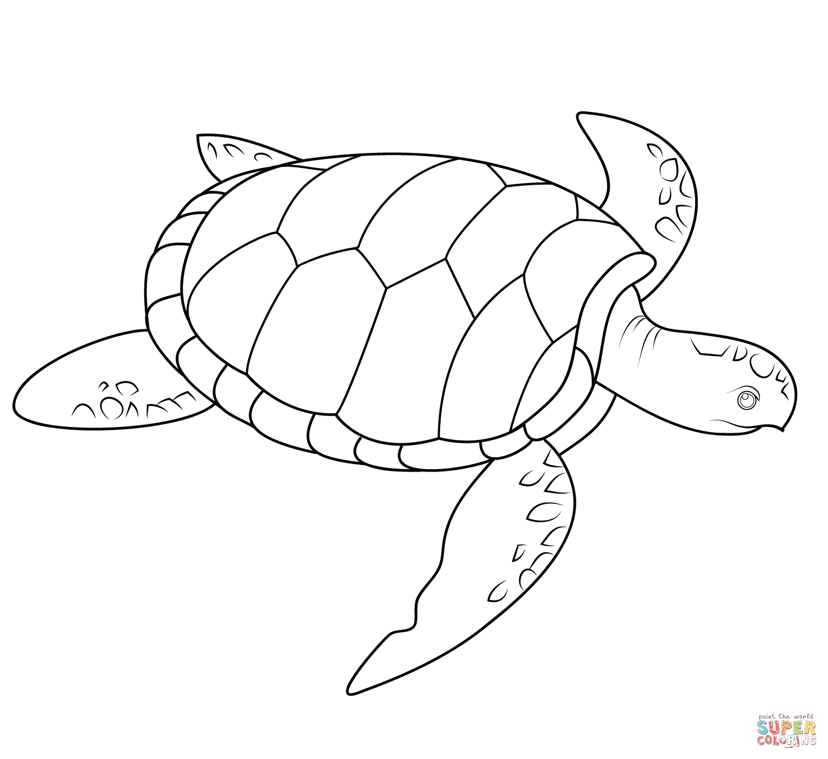 sea turtle coloring pages turtle outline drawing at getdrawings free download sea pages turtle coloring