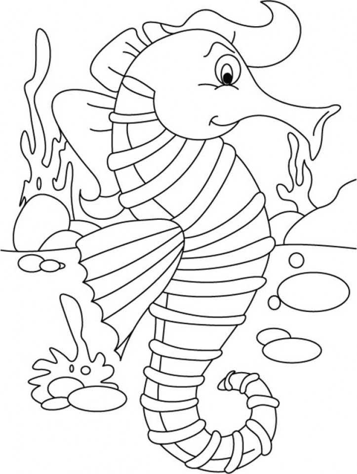 seahorse color sheet free seahorse coloring pages for kids color seahorse sheet