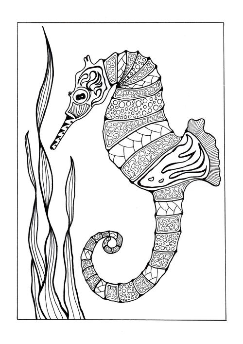 seahorse images for coloring seahorse coloring pages coloring images seahorse for