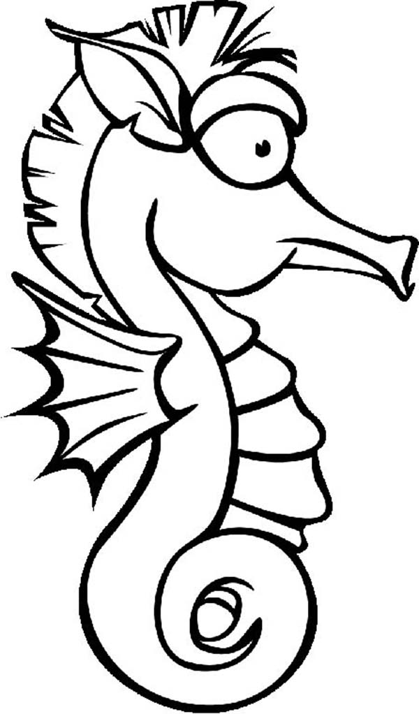seahorse images for coloring seahorse coloring pages images coloring seahorse for