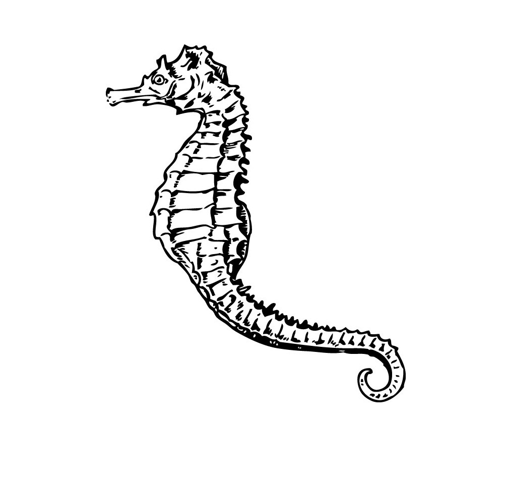 seahorse images for coloring seahorse coloring pages seahorse images for coloring