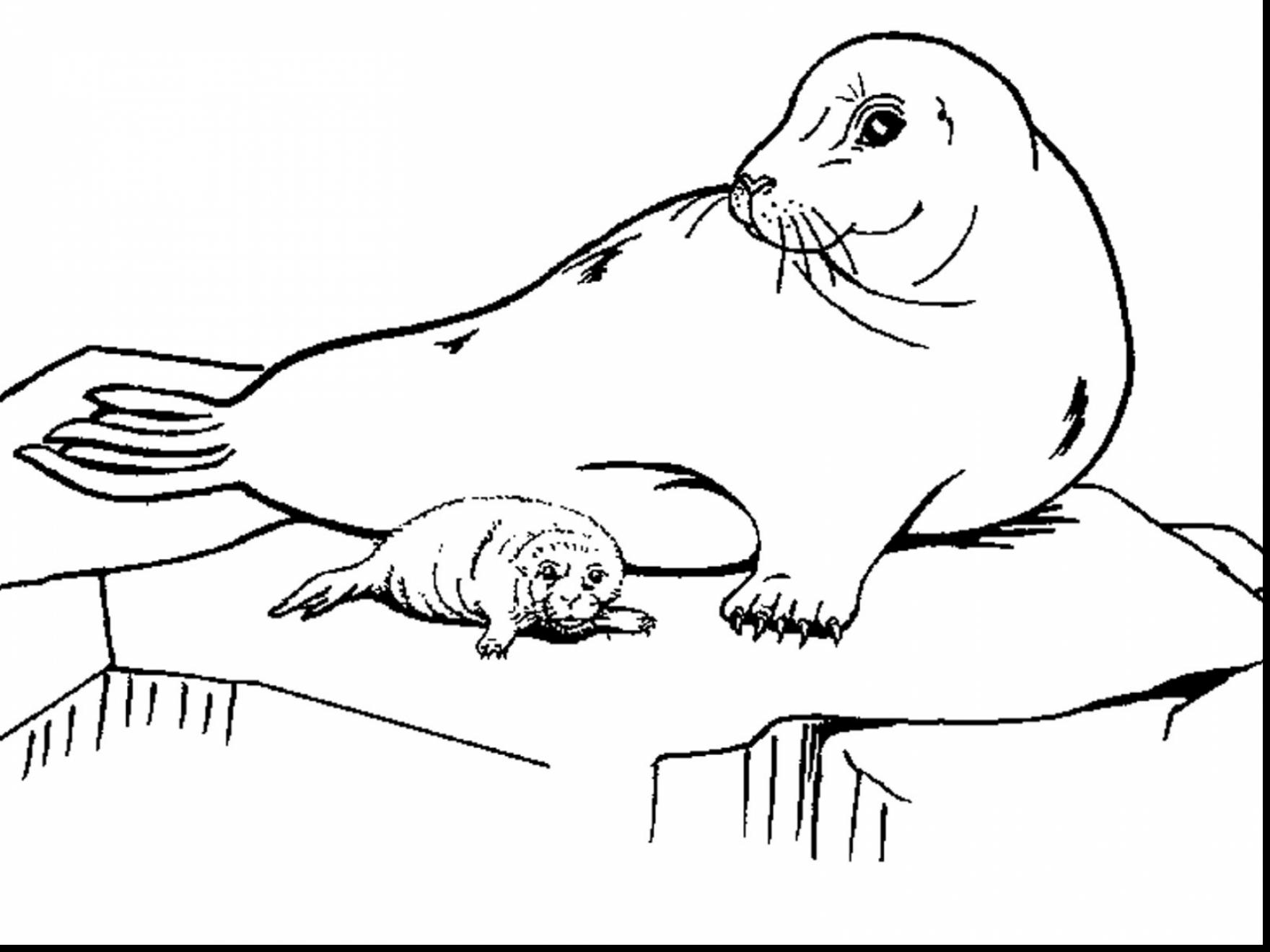 seal coloring page free seal coloring pages page seal coloring