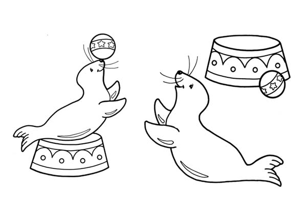 seal coloring page harbor seal coloring page cswd coloring page seal