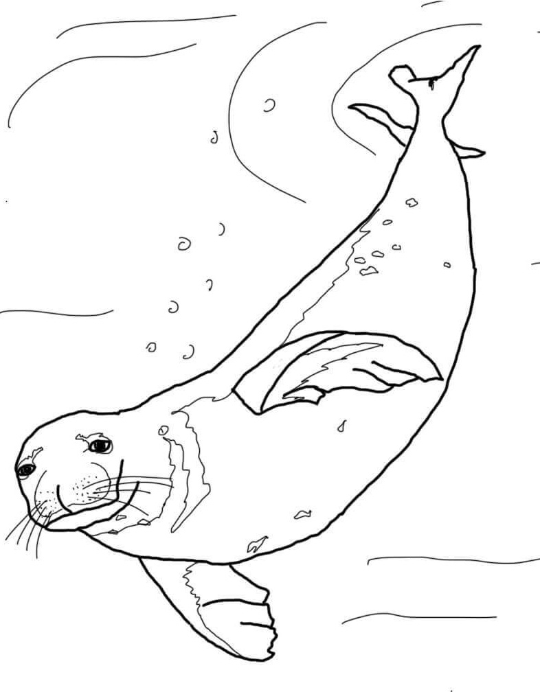 seal coloring page little harbor seal sea animals coloring pages for kids page seal coloring
