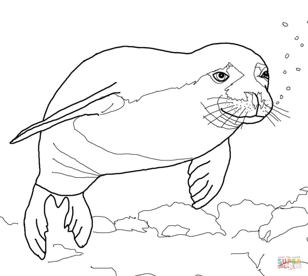 seal coloring page seal coloring pages download and print for free coloring page seal