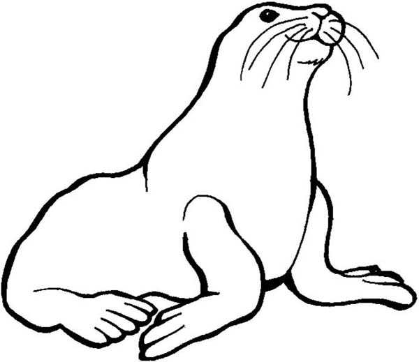 seal coloring page seal coloring pages download and print for free coloring seal page
