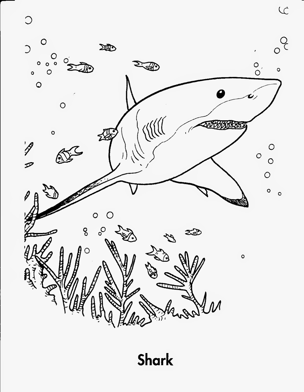 shark colour in baby shark coloring pages coloring home in colour shark