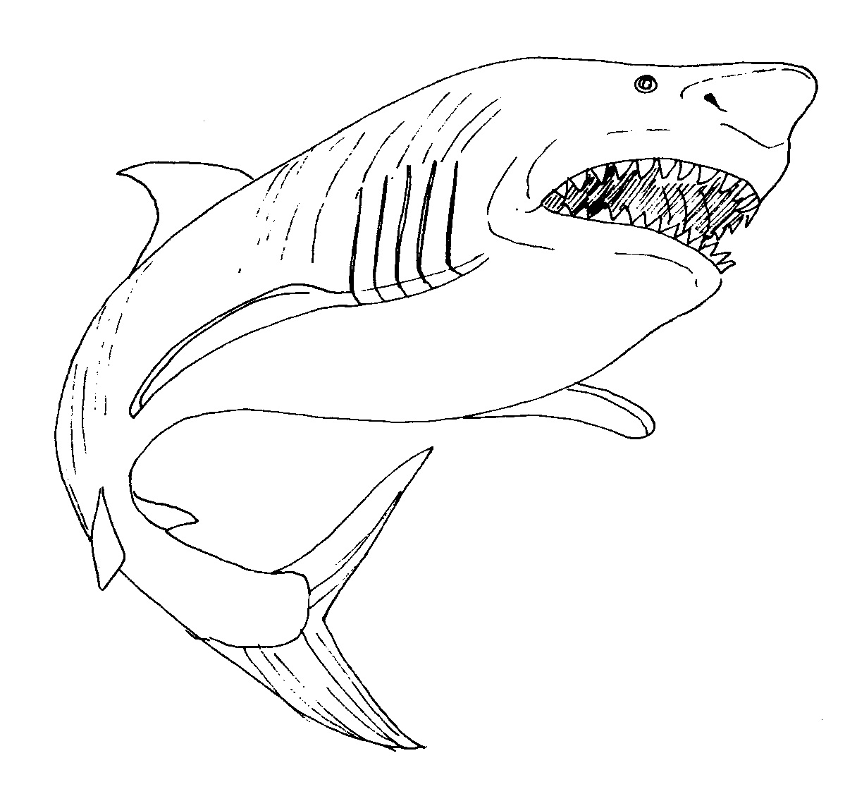 shark colour in coloring pages shark coloring pages free and printable in shark colour