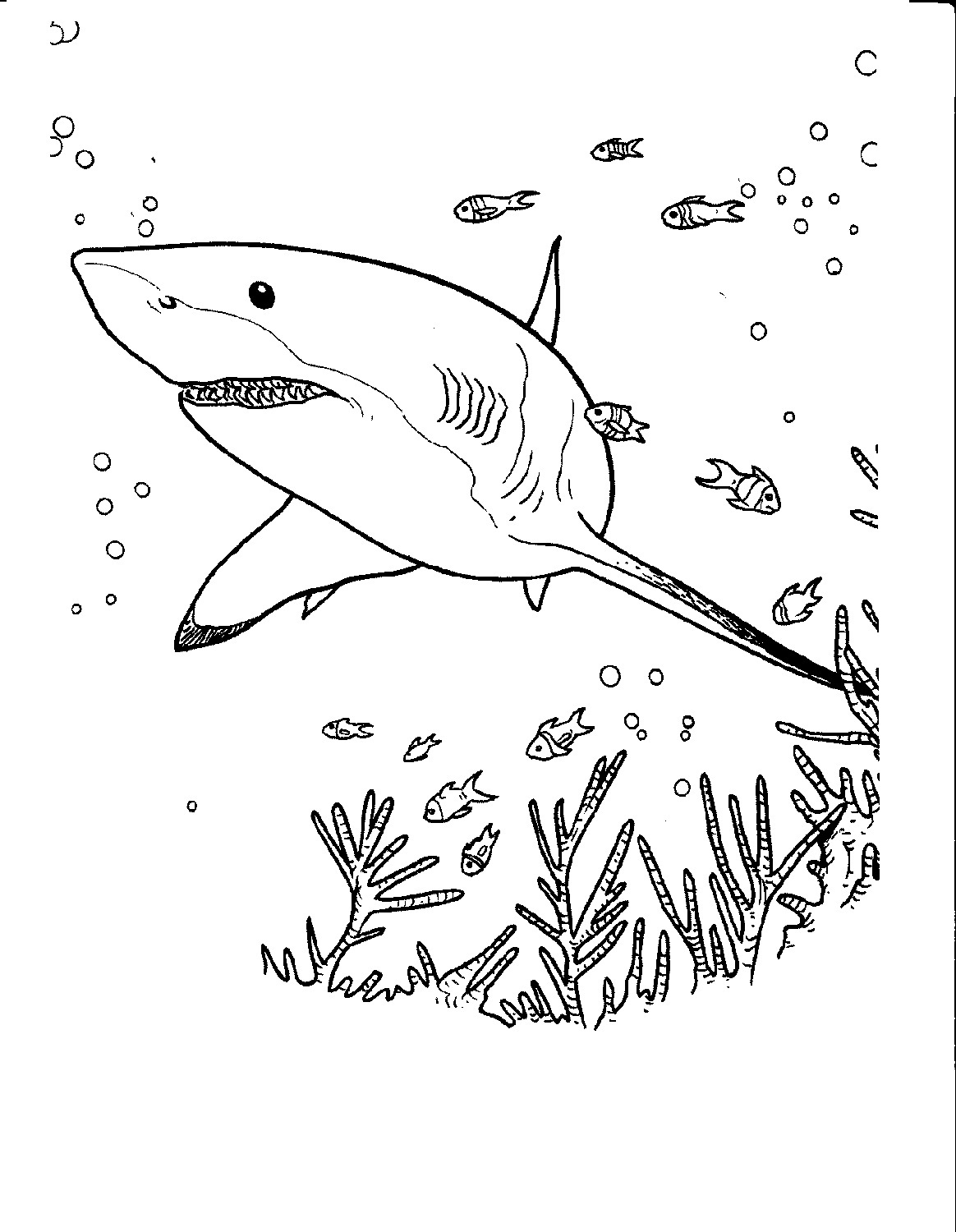 shark colour in free shark coloring pages for adults printable to shark in colour