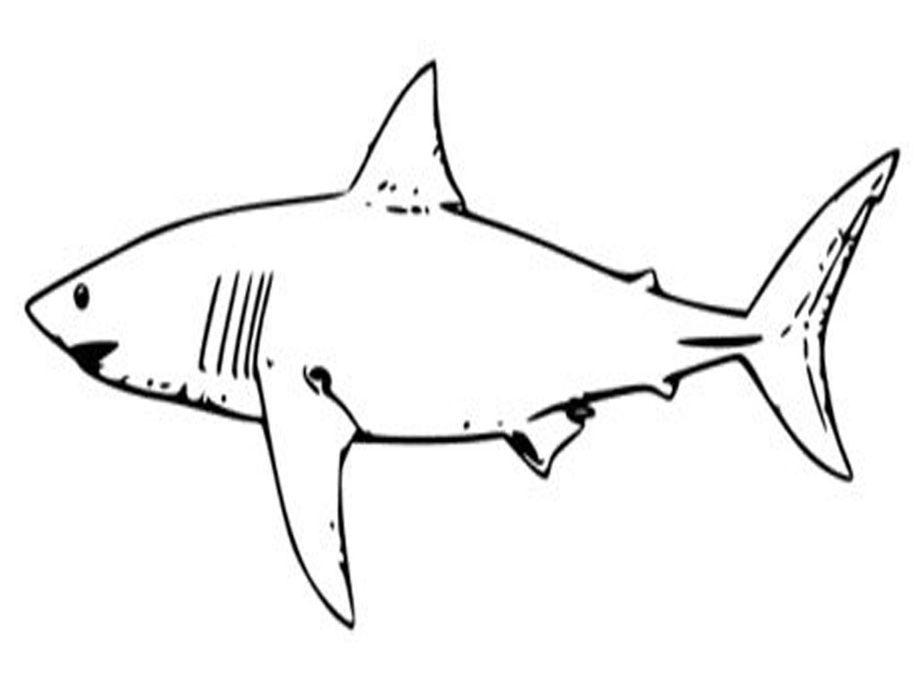 shark colour in great white shark coloring pages to download and print for colour in shark