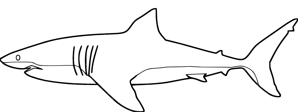 shark colour in pictures of sharks for kids to color a simple drawing of shark colour in