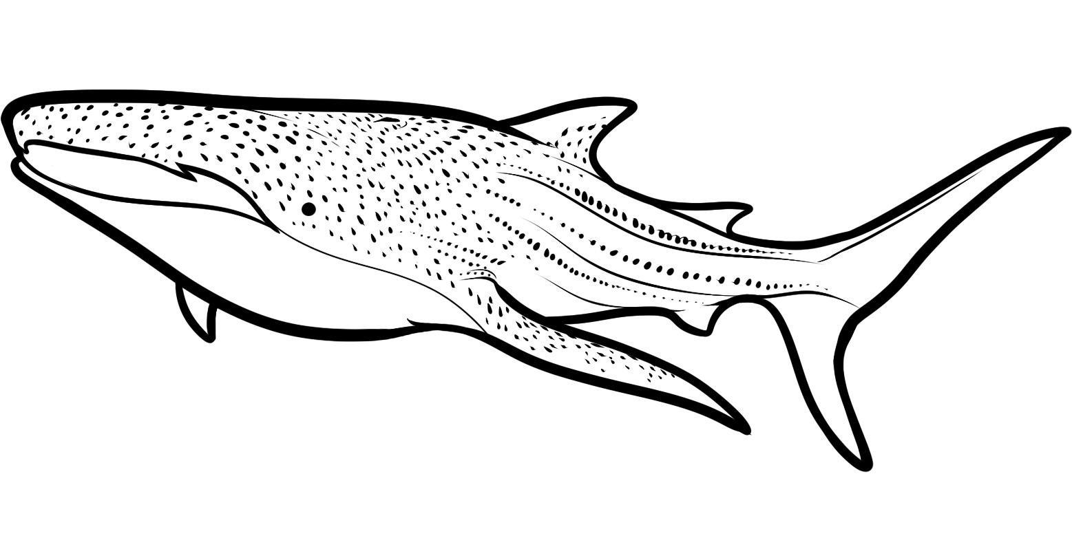 shark pictures to colour in 33 free shark coloring pages printable pictures colour to in shark