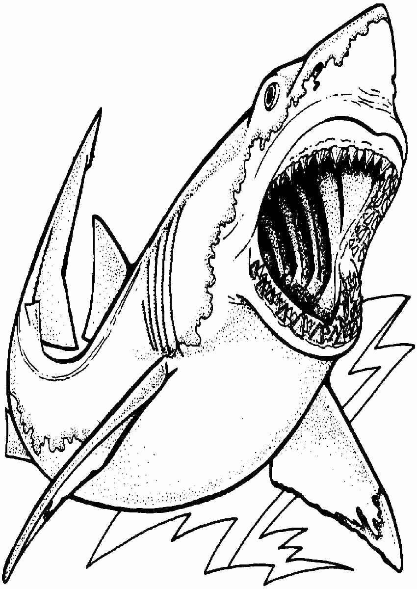 shark pictures to colour in coloring pages shark coloring pages free and printable shark in pictures to colour