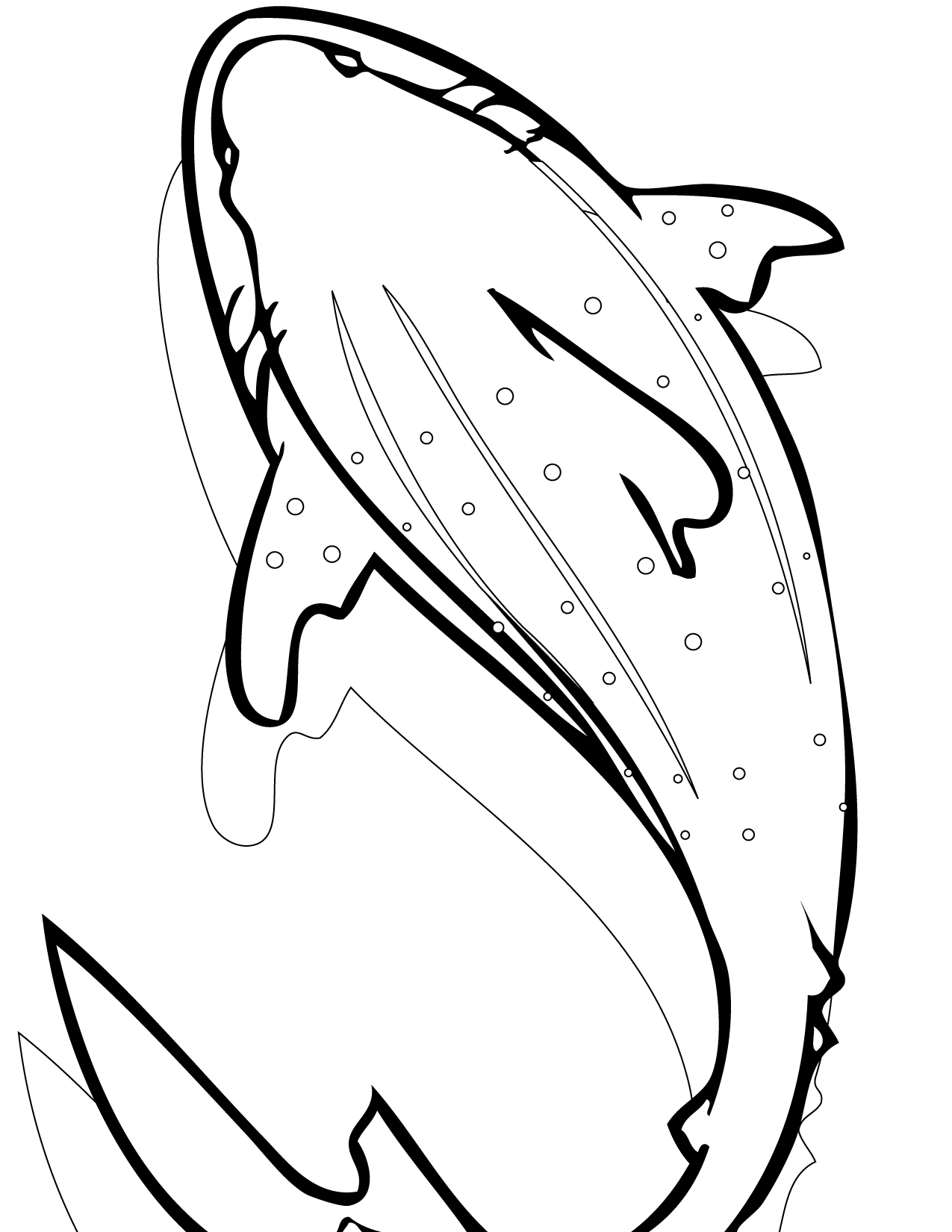 shark pictures to colour in free printable shark coloring pages for kids colour to shark in pictures