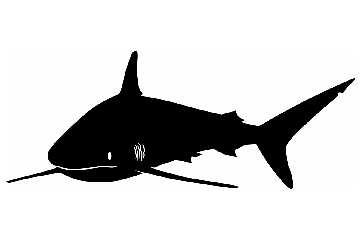 shark silouette great white shark silhouette at getdrawings free download shark silouette