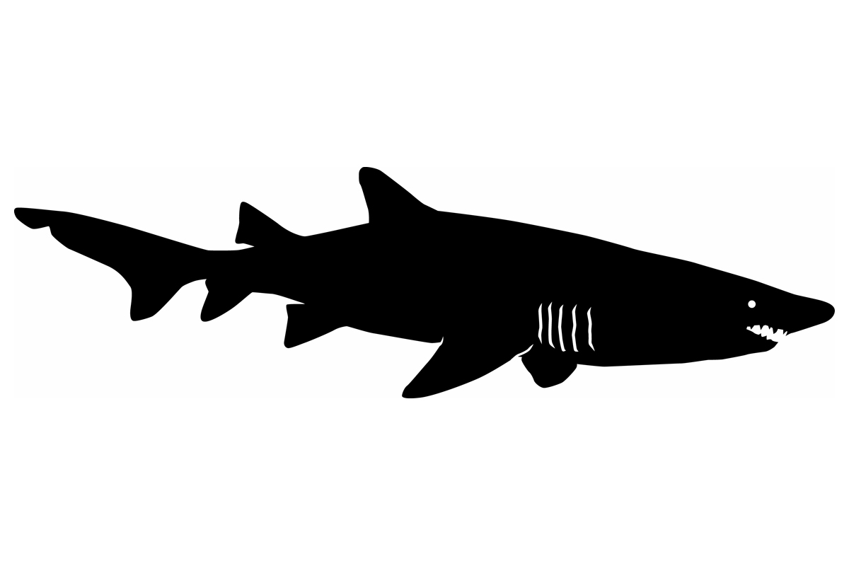 shark silouette great white shark silhouette at getdrawings free download silouette shark