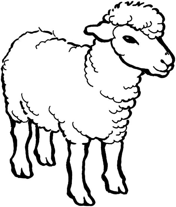 sheep for coloring cute sheep line art free clip art for coloring sheep